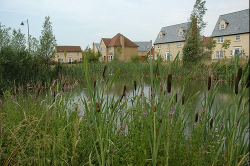 Houses in distance behind pond