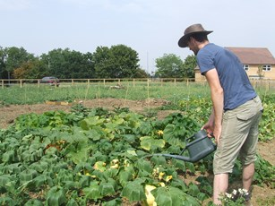 A man watering plants and vegetables at an allotment