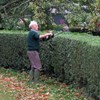 Hedge trimmings